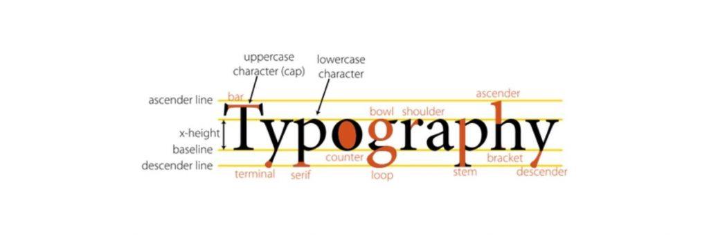 Basics in Typography - Typographic Anatomy